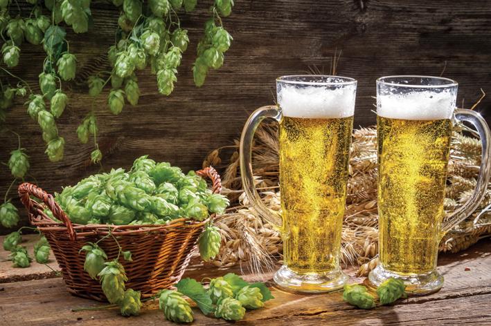 Cerveja e lupulo